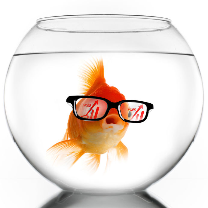Goldfish in glass bowl wearing reading glasses & sales graphs inside them. Representing short attention span impact on sales.
